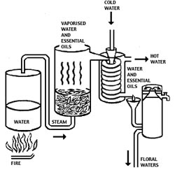 Steamdistillation
